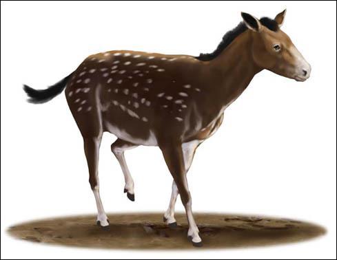 Comment se nomme le deuxième ancêtre du cheval ?