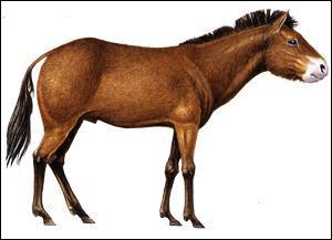 Comment se nomme le troisième ancêtre du cheval ?