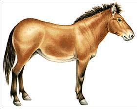 Comment se nomme le quatrième ancêtre du cheval ?
