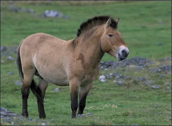 Comment se nomme ce cheval ?