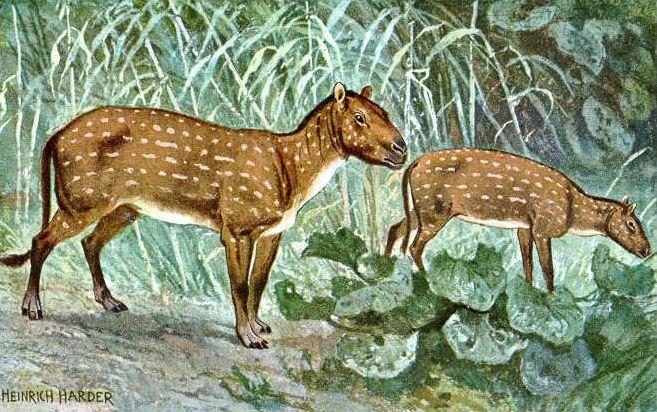 Les ancêtres des chevaux