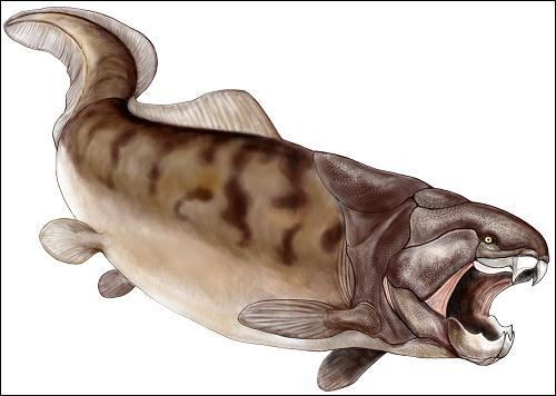 Comment s'appelle ce poisson préhistorique ?