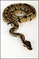 Quel est cet animal ? (hé oui certaines personnes prennent cela pour animaux de compagnie)