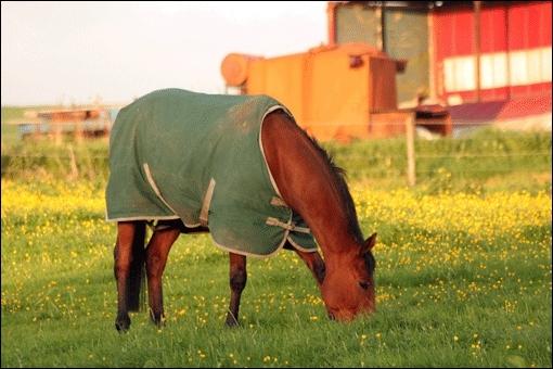 Le cheval est herbivore