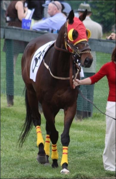 Après un effort violent, le cheval ne doit pas boire une trop grande quantité d'eau froide