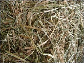 Le fourrage est constitué de plantes séchées ou fraîches