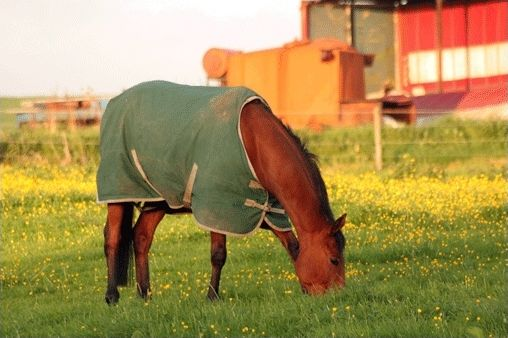 Quizz étrier d'or (Galop 3) sur l'alimentation des chevaux