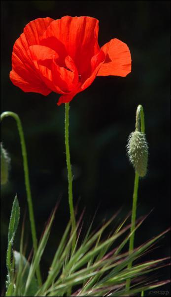 Quelle est cette fleur ?