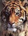 Les animaux en images