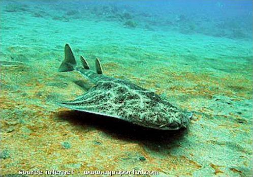 Requins 4