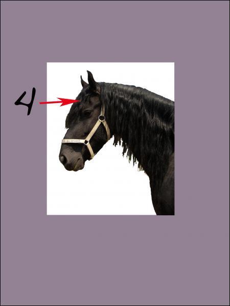 A quoi correspond le 4 sur la photo (sous la crinière) ?