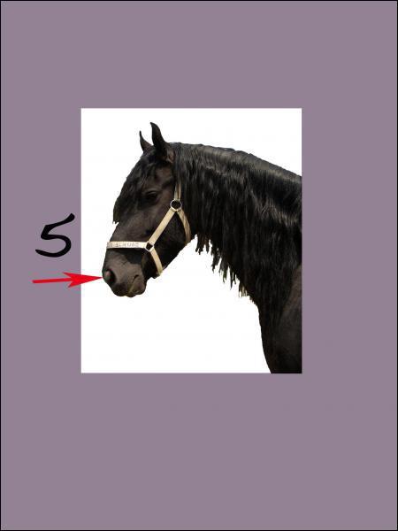 A quoi correspond le 5 sur la photo (entre les naseaux) ?