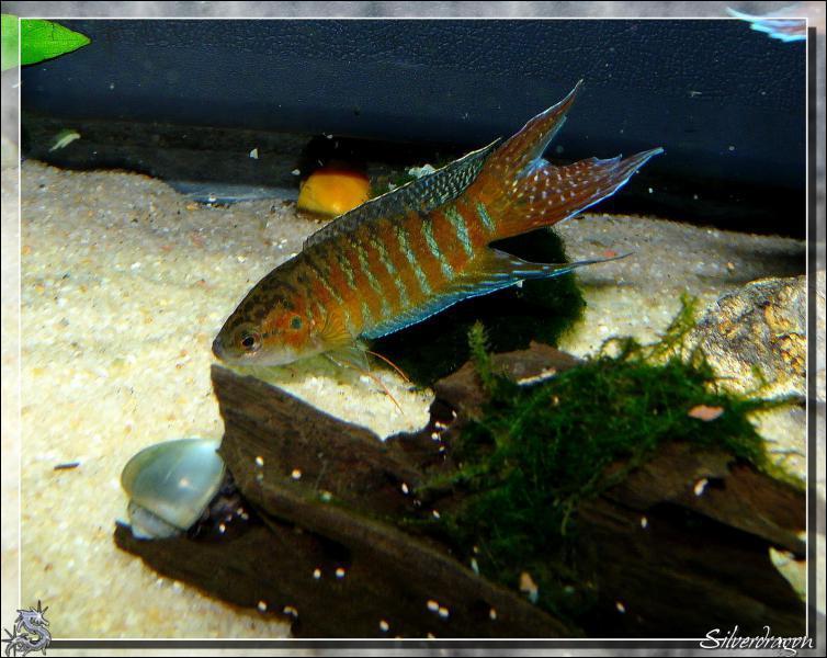 Comment s'appelle ce poisson ?