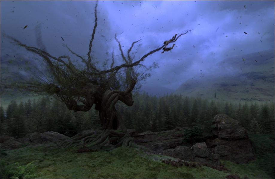 Sur quel arbre Harry et Ron s'écrasent-t-ils avec la Ford Anglia ?