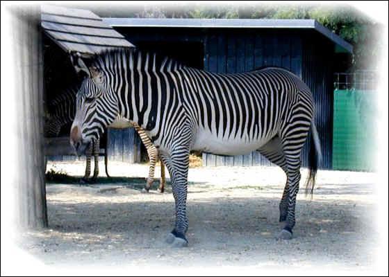 Quel est cet animal menacé ?