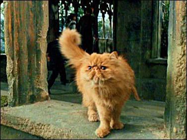 Comment se nomme le chat appartenant à Hermione Granger ?