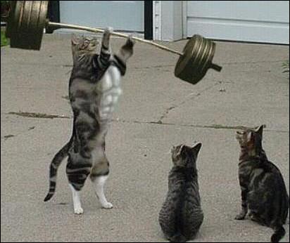Quel sport fait ce chat ?