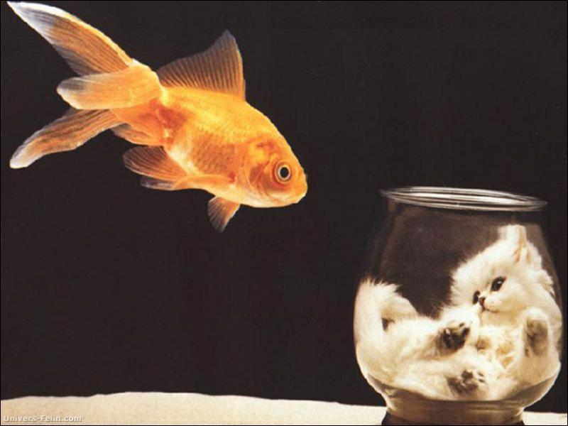 Ce poisson rouge a échangé sa place avec ?