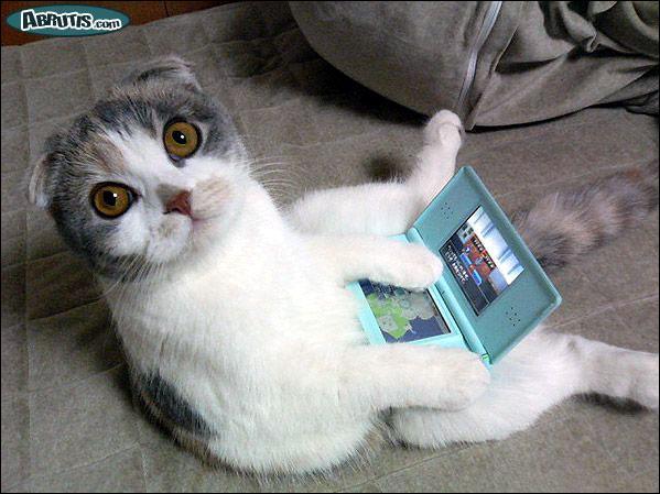 Ce chat joue à ...