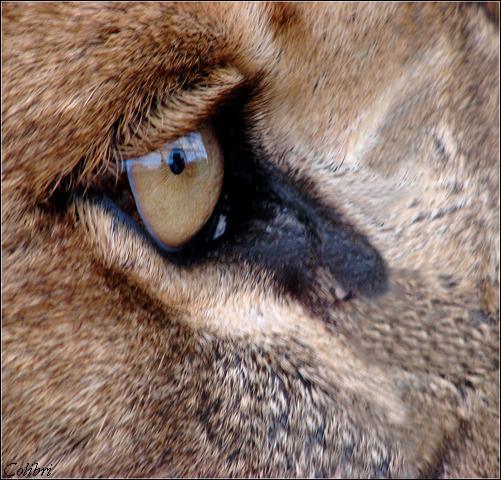 A quel animal appartient cet oeil ?