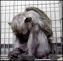 En Europe, 1 animal meurt torturé toutes les: