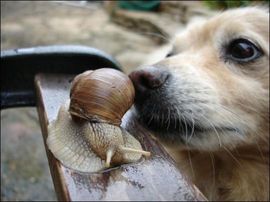 La Bave de l'escargot contient :