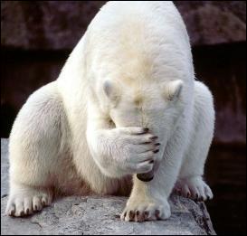 Si rien n'est fait les ours polaires d'Alaska auront disparu d'ici combien de temps ?