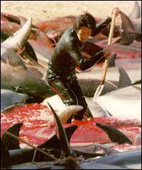 Combien des réserves mondiales de poissons sont épuisées, surexploitées, ou en passe de l'être ?