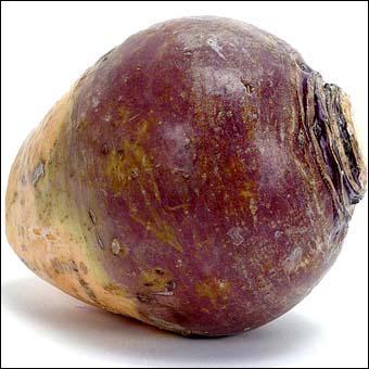 Quel est le nom de cette variété de chou ?