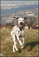 De quelle race est ce chien ?