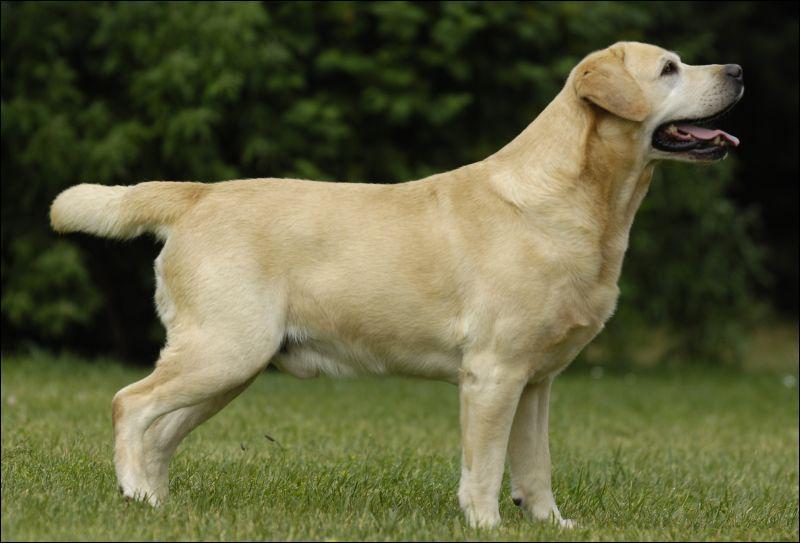 De quelle race de chien sagit-il ?