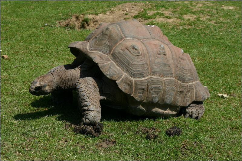 Les tortues géantes de Galapagos détiennent le record de l'espérance de vie animale. Combien peuvent-elles vivre en moyenne ?