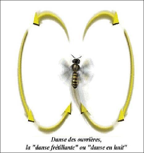 Pourquoi les abeilles dansent-elles ?