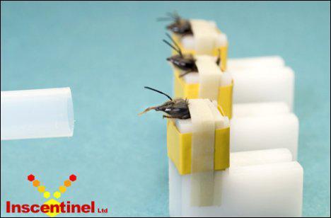 A quoi sont employées les abeilles dans les recherches récentes ? (plusieurs bonnes réponses)