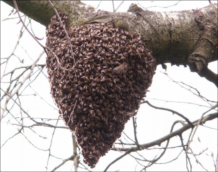 Que font les abeilles en hiver ? (3 bonnes réponses)