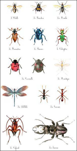 A quels ordre et super-famille d'insectes appartient l'abeille ?