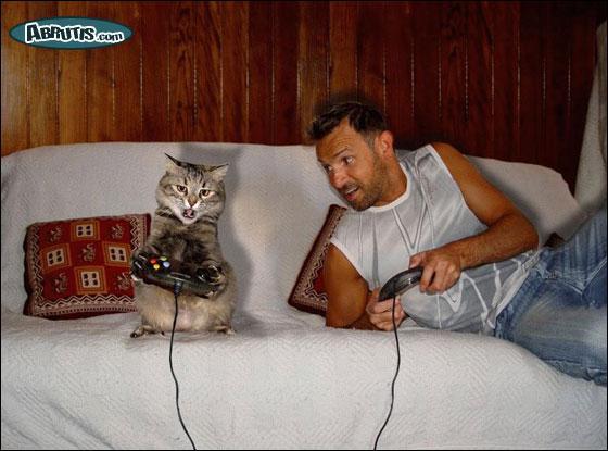 Ce chat joue avec un ?
