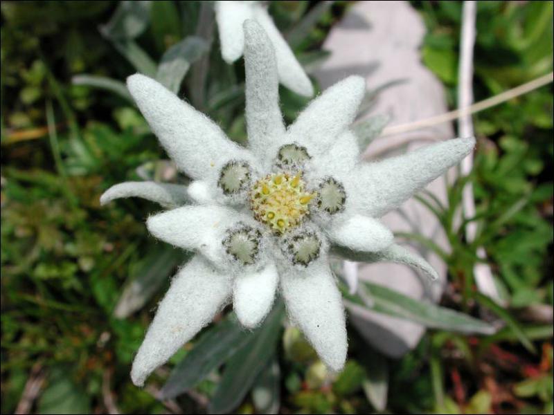 Comment se nomme cette plante ?