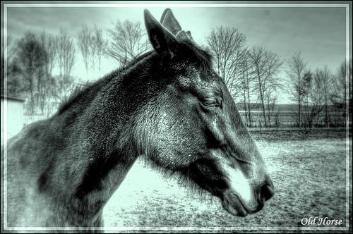 Après ce grand saut le cheval :