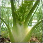 Quel est ce légume ?