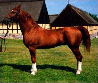 Complétez la race de cheval : Le fre... ... .org :
