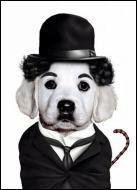 Ce chien se prend pour un acteur du cinéma muet. Quel est son nom ?