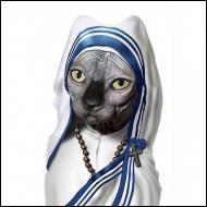 Cette chatte se prend pour une célèbre religieuse missionnaire. Quel est son nom ?