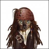 Ce chat se prend pour un personnage du film   Pirates des Caraïbes . Quel est son nom ?