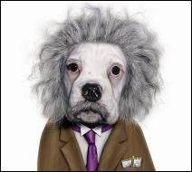 Ce chien se prend pour un grand savant. Quel est son nom ?