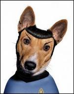 Ce chien se prend pour un personnage de la série  Star Trek . Quel est son nom ?