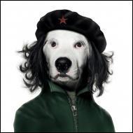 Ce chien se prend pour un célèbre guerillero . Quel est son nom ?
