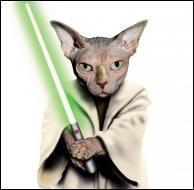 Ce chat se prend pour un personnage de la saga  Star Wars . Quel est son nom ?