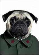 Ce chien se prend pour un grand dirigeant communiste. Quel est son nom ?