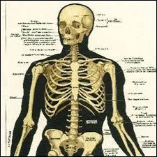 De combien dos se compose votre squelette ?